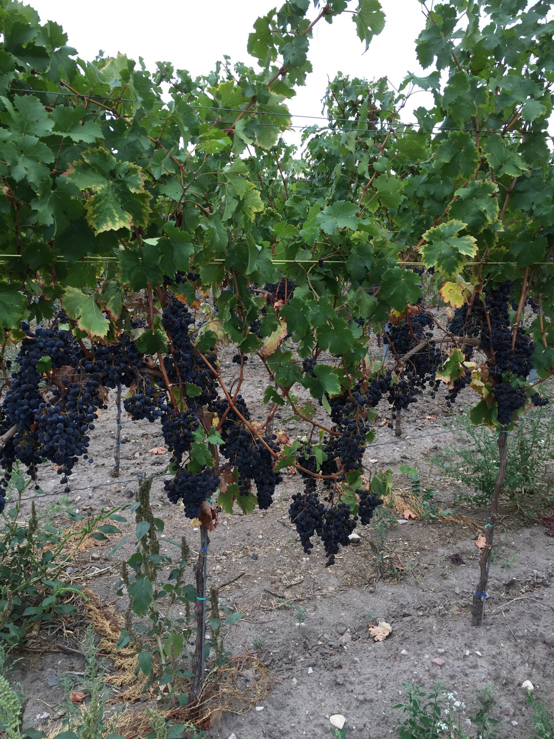 Vin mark